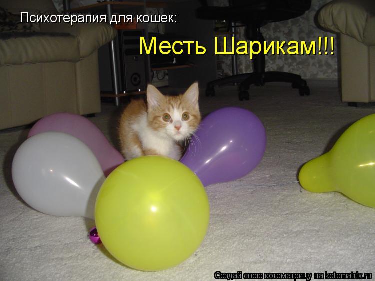 Котоматрица: Психотерапия для кошек: Месть Шарикам!!!