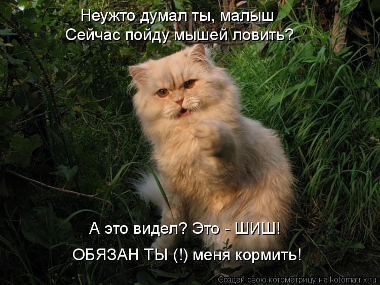 Котоматрица: Неужто думал ты, малыш Сейчас пойду мышей ловить? А это видел? Это - ШИШ! ОБЯЗАН ТЫ (!) меня кормить!