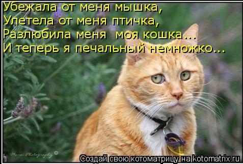 Котоматрица: Улетела от меня птичка, Убежала от меня мышка, Разлюбила меня  моя кошка... И теперь я печальный немножко...