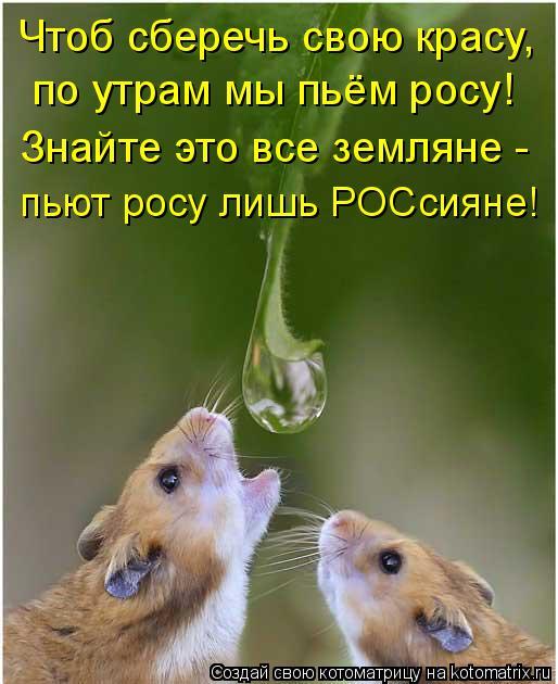 Котоматрица: Чтоб сберечь свою красу, по утрам мы пьём росу! Знайте это все земляне - пьют росу лишь РОСсияне!