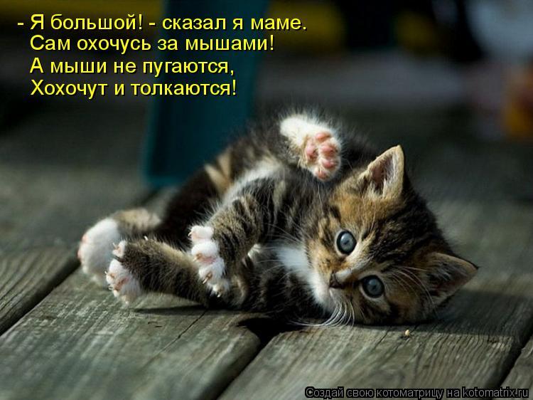 Котоматрица: - Я большой! - сказал я маме.   Сам охочусь за мышами!   А мыши не пугаются,  Хохочут и толкаются!