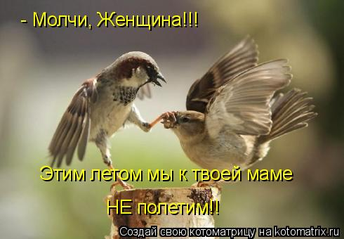 Котоматрица: - Молчи, Женщина!!! Этим летом мы к твоей маме  НЕ полетим!!