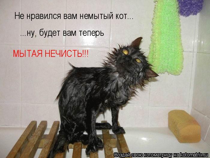 Котоматрица: Не нравился вам немытый кот... ...ну, будет вам теперь  МЫТАЯ НЕЧИСТЬ!!!