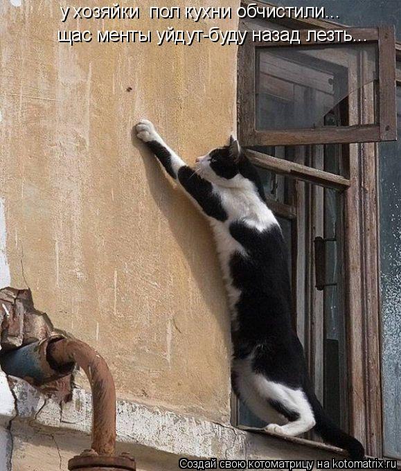 Котоматрица: у хозяйки  пол кухни обчистили... щас менты уйдут-буду назад лезть...