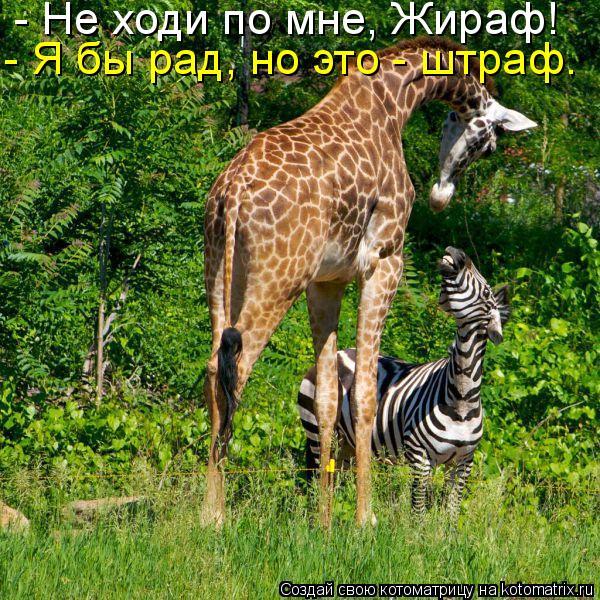 Котоматрица: - Не ходи по мне, Жираф!  - Я бы рад, но это - штраф.