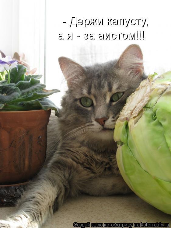 Котоматрица: - Держи капусту,  а я - за аистом!!!