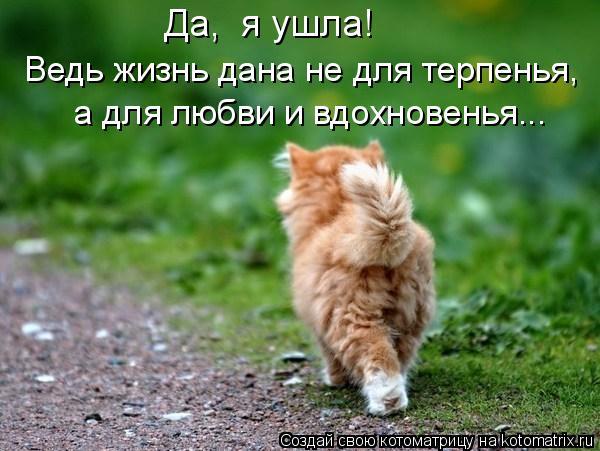 Котоматрица: Да,  я ушла! Ведь жизнь дана не для терпенья, а для любви и вдохновенья...