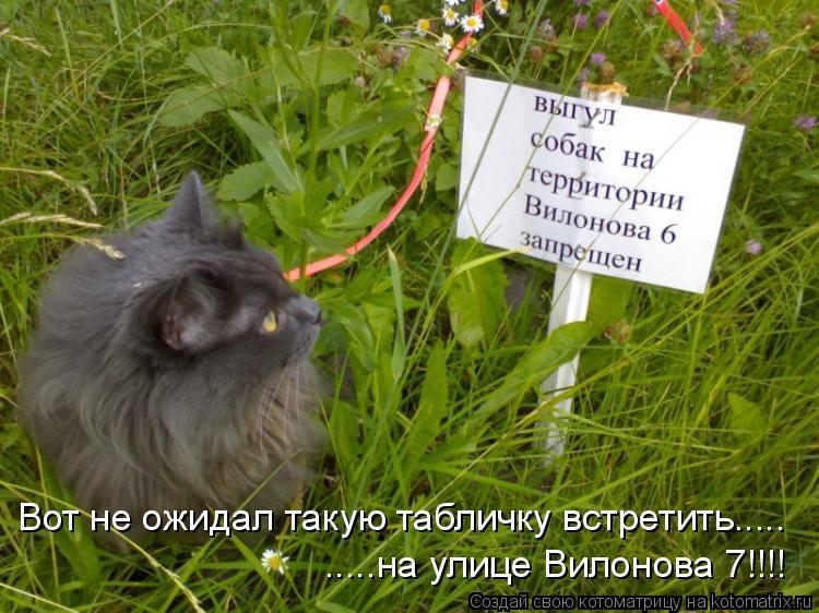 Котоматрица: Вот не ожидал такую табличку встретить..... .....на улице Вилонова 7!!!!