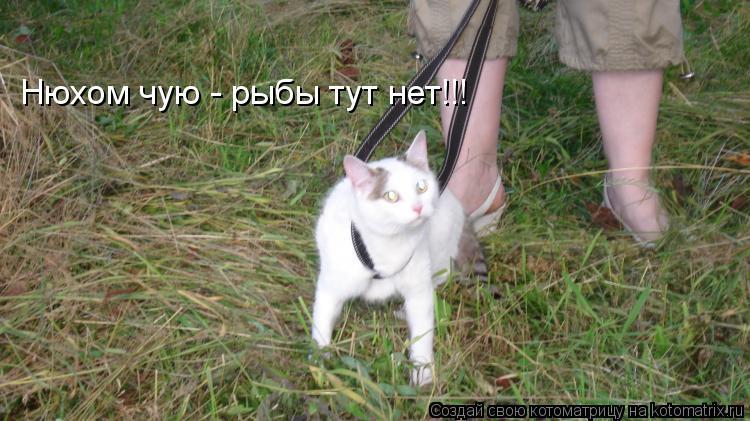 Котоматрица: Нюхом чую - рыбы тут нет!!!