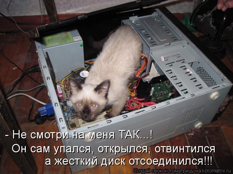 Котоматрица: - Не смотри на меня ТАК...! Он сам упался, открылся, отвинтился а жесткий диск отсоединился!!!