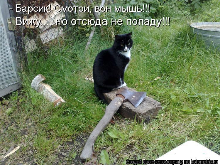 Котоматрица: - Барсик! Смотри, вон мышь!!! - Вижу.... но отсюда не попаду!!!