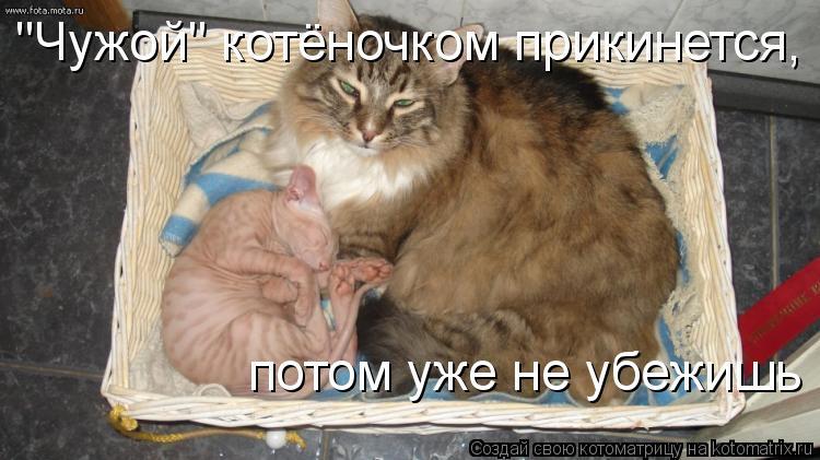 """Котоматрица: """"Чужой"""" котёночком прикинется, потом уже не убежишь"""