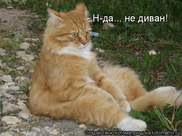 Котоматрица: - Н-да... не диван!