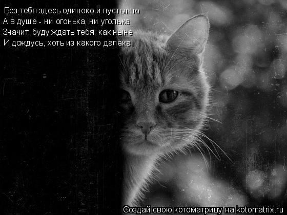 Котоматрица: Без тебя здесь одиноко и пустынно А в душе - ни огонька, ни уголька. Значит, буду ждать тебя, как ныне,  И дождусь, хоть из какого далека... ...