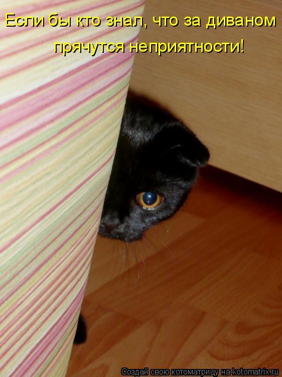 Котоматрица: Если бы кто знал, что за диваном прячутся неприятности!