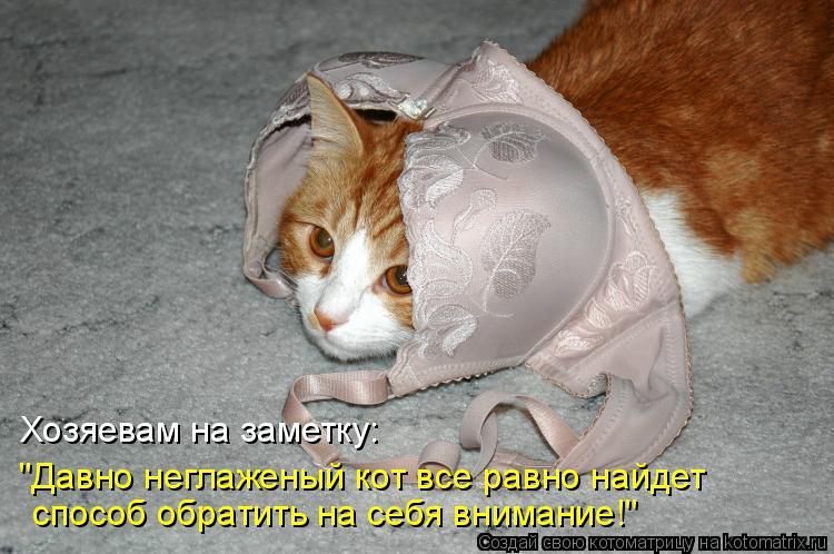 """Котоматрица: Хозяевам на заметку: способ обратить на себя внимание!"""" """"Давно неглаженый кот все равно найдет"""