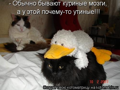 Котоматрица: - Обычно бывают куриные мозги, а у этой почему-то утиные!!!