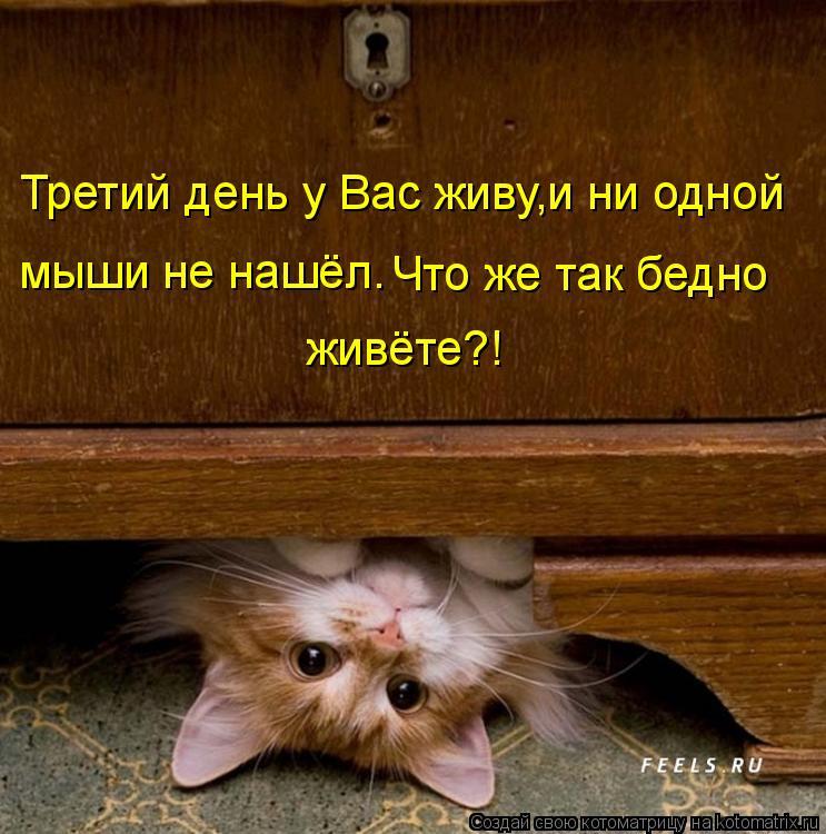Котоматрица: Третий день у Вас живу,и ни одной  мыши не нашёл. Что же так бедно живёте?!