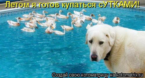 Котоматрица: Летом я готов купаться сУТКАМИ!