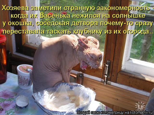 Котоматрица: Хозяева заметили странную закономерность -  когда их Васенька нежился на солнышке  у окошка, соседская детвора почему-то сразу  переставала