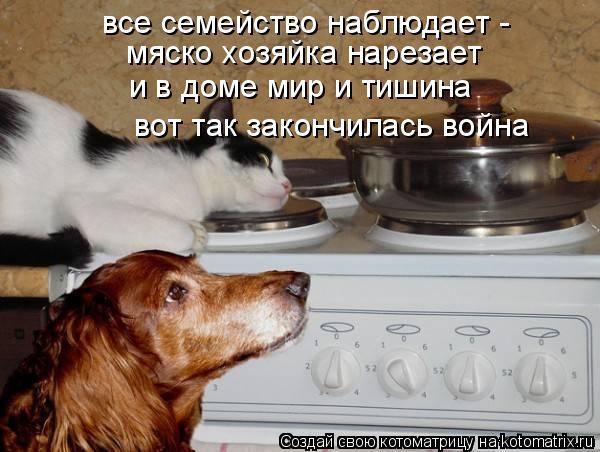 Котоматрица: все семейство наблюдает -  мяско хозяйка нарезает и в доме мир и тишина вот так закончилась война
