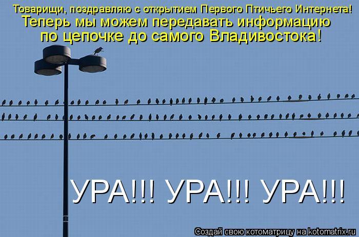 Котоматрица: Товарищи, поздравляю с открытием Первого Птичьего Интернета!  Теперь мы можем передавать информацию  по цепочке до самого Владивостока! УР