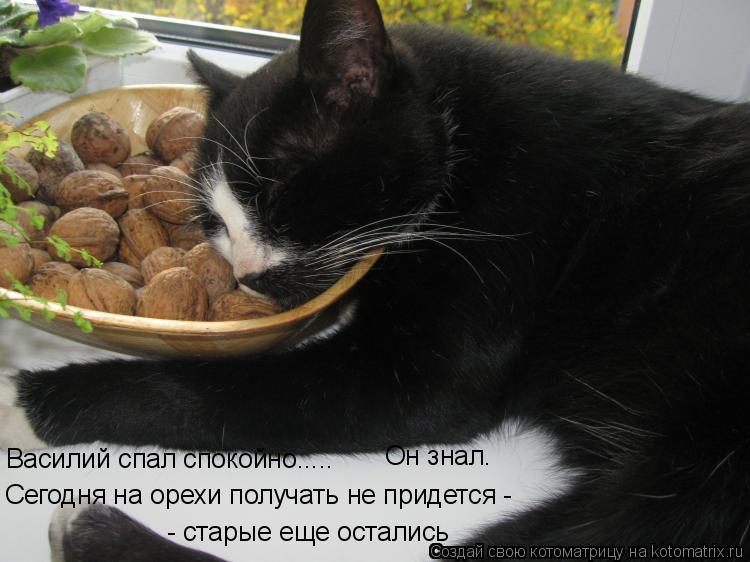 Котоматрица: - старые еще остались Сегодня на орехи получать не придется -  Василий спал спокойно..... Он знал.