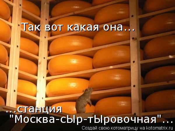 """Котоматрица: Так вот какая она...  ...станция """"Москва-сЫр-тЫровочная""""..."""