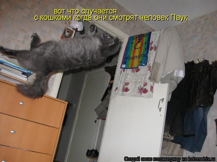 Котоматрица: вот что случается  с кошкоми когда они смотрят человек Паук
