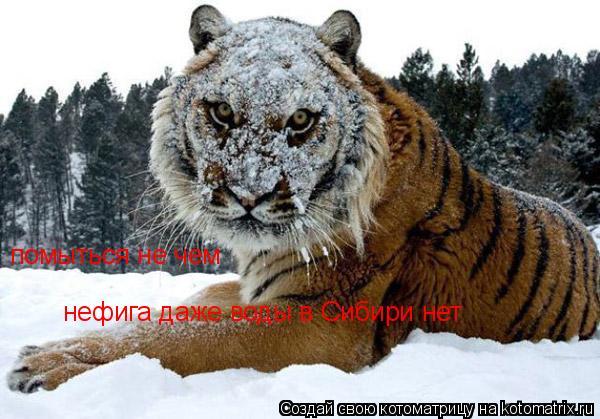 Котоматрица: нефига даже воды в Сибири нет  помыться не чем