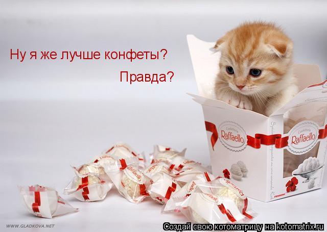 Котоматрица: Ну я же лучше конфеты? Правда?
