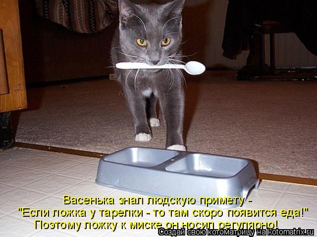 """Котоматрица: Васенька знал людскую примету -  """"Если ложка у тарелки - то там скоро появится еда!"""" Поэтому ложку к миске он носил регулярно!"""