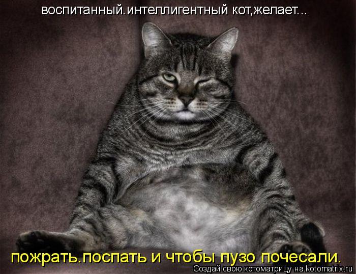 Котоматрица: воспитанный.интеллигентный кот,желает... пожрать.поспать и чтобы пузо почесали.