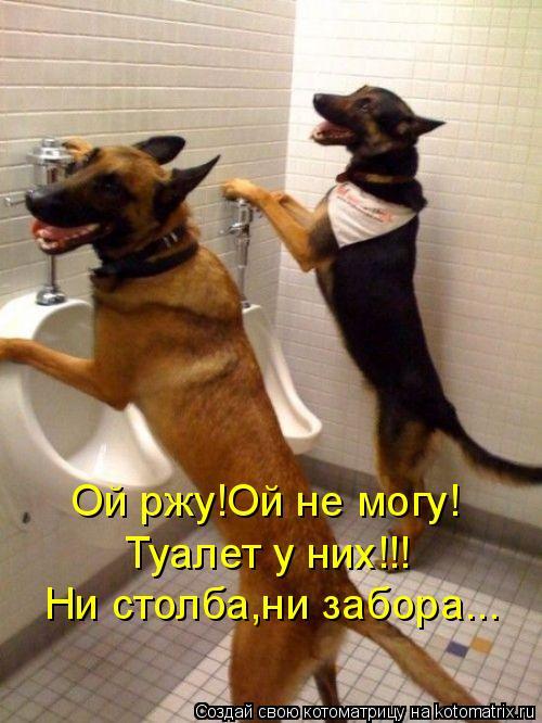 Котоматрица: Туалет у них!!! Ой ржу!Ой не могу! Ни столба,ни забора...