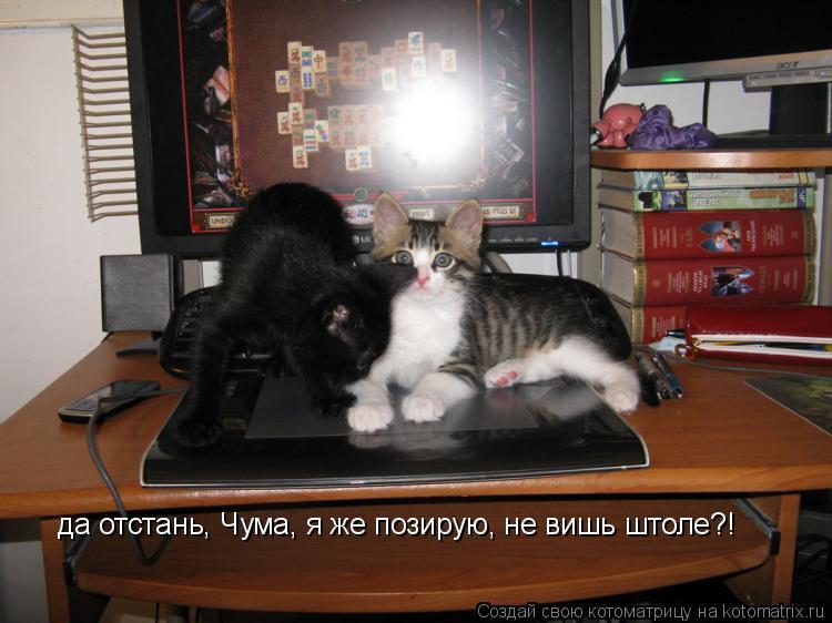 Котоматрица: да отстань, Чума, я же позирую, не вишь штоле?!