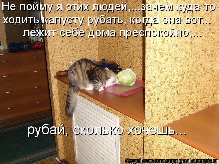 Котоматрица: Не пойму я этих людей,…..зачем куда-то  ходить капусту рубать, когда она вот….. лежит себе дома преспокойно,... рубай, сколько хочешь…..
