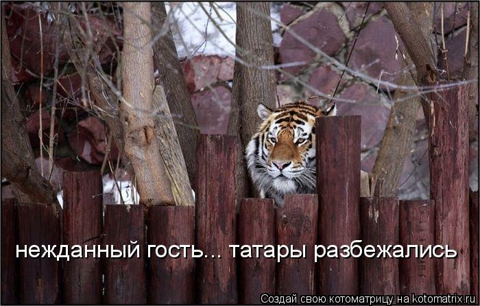 Котоматрица: нежданный гость... татары разбежались