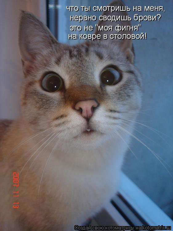 """Котоматрица: что ты смотришь на меня, нервно сводишь брови? это не """"моя фигня"""" на ковре в столовой!"""