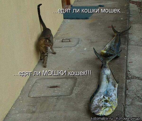 Котоматрица: ...едят ли кошки мошек... ...едят ли МОШКИ кошек!!!