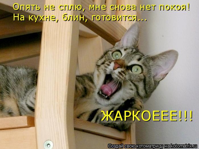 Котоматрица: Опять не сплю, мне снова нет покоя! На кухне, блин, готовится... ЖАРКОЕЕЕ!!!