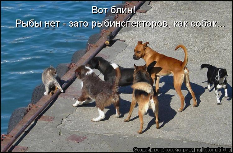 Котоматрица: Вот блин!  Рыбы нет - зато рыбинспекторов, как собак...