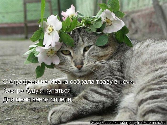Котоматрица: Завтра буду я купаться С Аграфены на Ивана собрала траву в ночи. Для меня венок сплели...