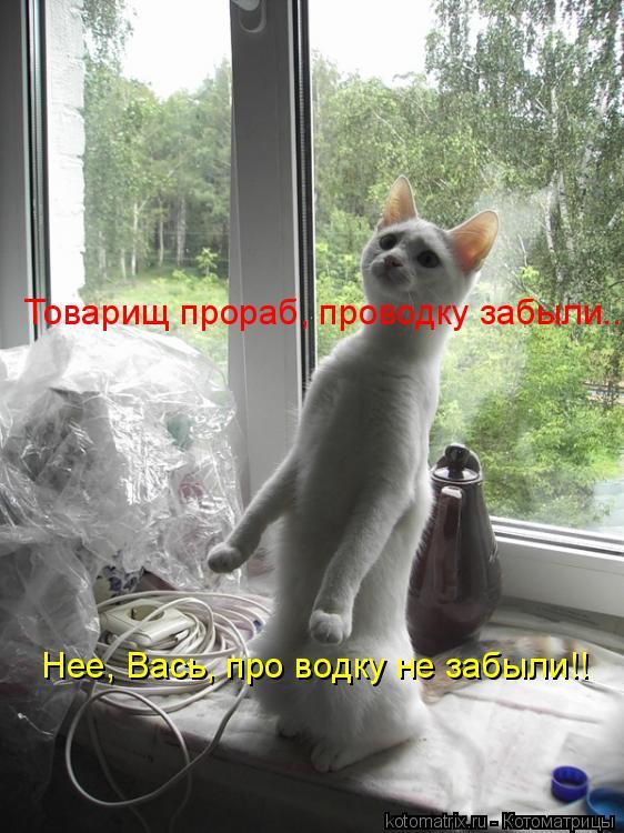 Котоматрица: Товарищ прораб, проводку забыли.... Нее, Вась, про водку не забыли!!