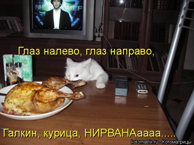Котоматрица: Глаз налево, глаз направо, Галкин, курица, НИРВАНАаааа.....