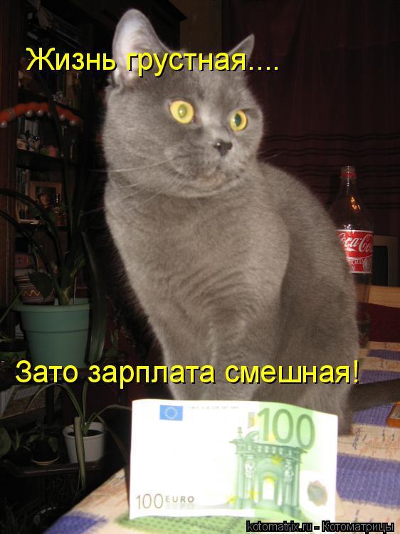 Котоматрица: Жизнь грустная.... Зато зарплата смешная!