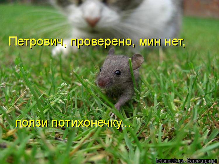 Котоматрица: Петрович, проверено, мин нет, ползи потихонечку...