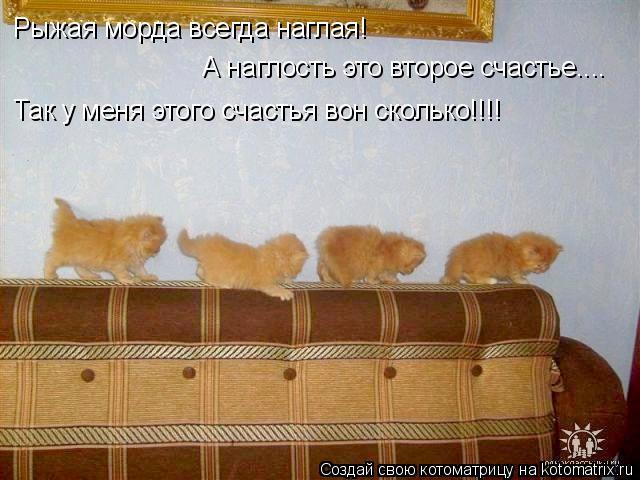 Котоматрица: Рыжая морда всегда наглая! Так у меня этого счастья вон сколько!!!! А наглость это второе счастье....