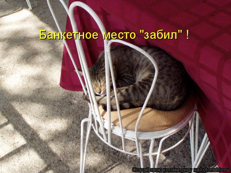 """Котоматрица: Банкетное место """"забил"""" !"""