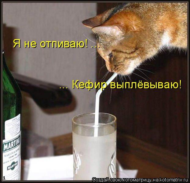 Котоматрица: Я не отпиваю! ... ... Кефир выплёвываю!