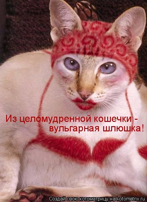 Котоматрица: Из целомудренной кошечки - вульгарная шлюшка!